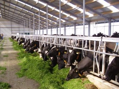 (2x) Nieuwbouw Melkveehouderij